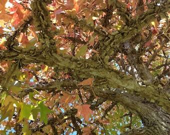 Under The Sweet Gum Tree/ Back Creek