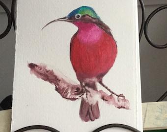Purple sun bird