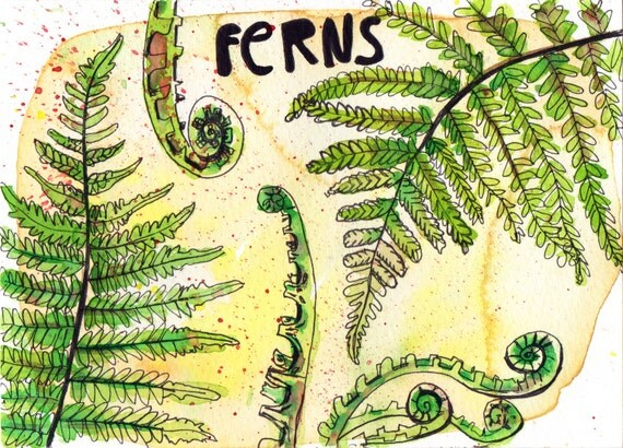 Ferns - Pen and Watercolour Painting