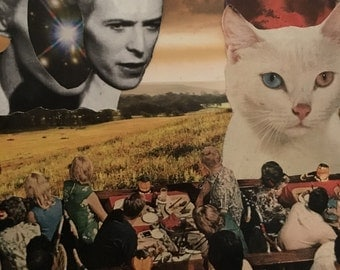 Bowie cat people