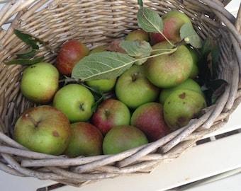 Norfolk Apples 8x10 canvas