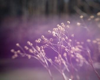 fine art print 11x14 purple weeds