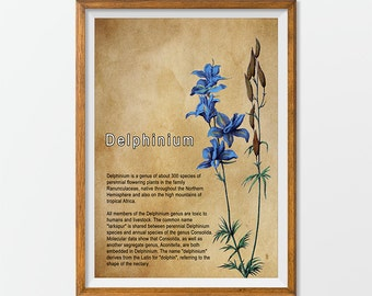Botanic Print Art Antique Vintage Botanical Flower Art