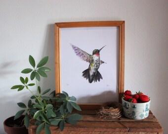 Bird Hummingbird Watercolour illustration