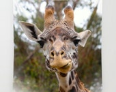 Giraffe Wall Tapestry ~ Funny Giraffe Art ~ Nursery Decor, Giraffe Wall Hanging, Zoo Animal Decor, Nature Photography, Children's Room Decor
