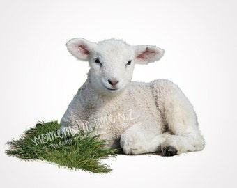 Moments In Time Lamb Farm Animal Digital Overlay