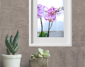 Orchids in purple stripes; photography, floral nature, nature decor.
