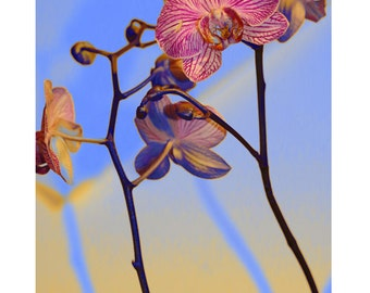 Orchid graphic style in color; photography, floral nature, nature decor.