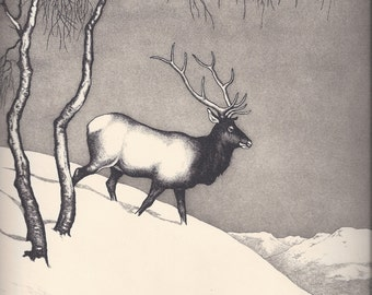 Olive Fell - Elk Bull; Winter