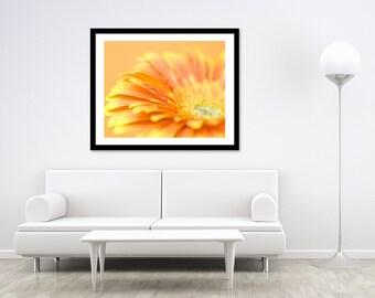 Orange Daisy Photography - Flower Photography Print - Floral Wall Art - Orange Flower Photography - Fine Art Print - 11x14 Print