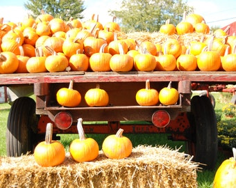 Pumpkins, fall harvest