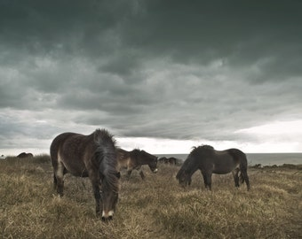 Photography, Fine art, Ponies, Horses Photography, Print,
