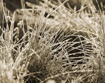 Frosty Grass Metal Print