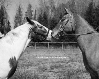 To Horse With Love...