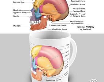 Skull Anatomy Educational Ceramic Novelty Mug