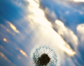 Picture of dandelion and sunset