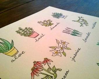 Healing Plants Print