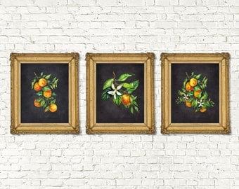 Instant Download Watercolor Mandarin Orange Printable Set of 3 Chalk Board | Kitchen Decor Botanical Prints | Botanical Watercolor | 8x10