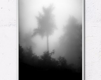 photography, forest in the mist, fine art print, landscape, art and collections, musing
