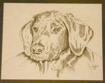 A beloved Pet Portrait