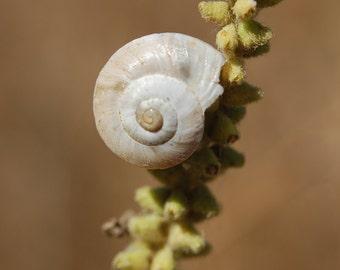 Y4 - White Snail