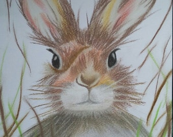 Bunny Rabbit In The Grass (pastel drawing)