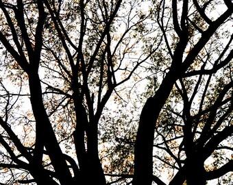 Old Tree Limited Edition 8x12 Print on Kodak Professional Endura Premier Metallic paper