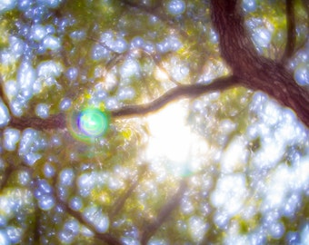 Nature photography - fairy light through an oak tree in Summer