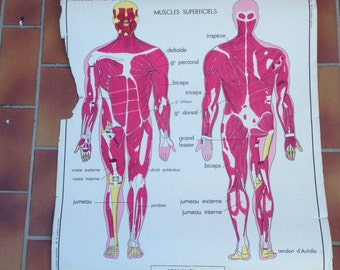 ROSSIGNOL Vintage French School Poster anatomy Two Sides 1950s-1960s 13