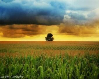 Tree of the Corn