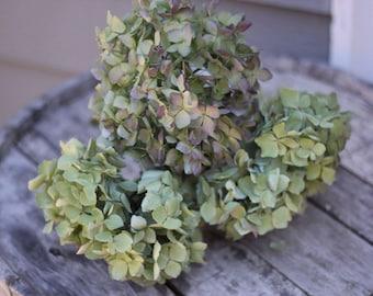 Dried Hydrangea Flower Stems (5 Stems), Macrophylla Hydrangea Blooms, Green/Blue/Lavender