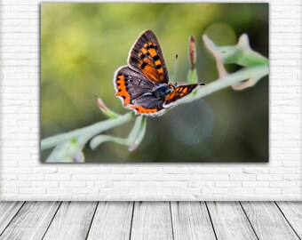 butterfly Art Print, Printable Wall Art, Photography, Wall Art, Digital Download, Nature print, bokeh
