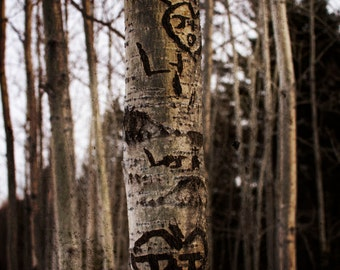 Carved Initials, Love Wall Art, Valentines Day Photograph, Carved Tree, Crush Photography