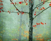 Summer Sale - another day, another fairytale - decorative photography - red leaves fog texture decor - stowe, vermont