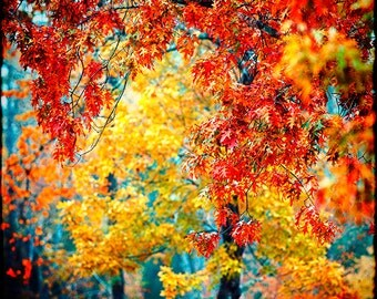 Colorful Foliage, Fall Photography, Autumn Photo, Vibrant Wall Art, Energizing Art, Nature Photography, Trees, Red Gold Blue, Fall Foliage