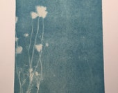 Large Queen Anne's Lace Cyanotype No. 10