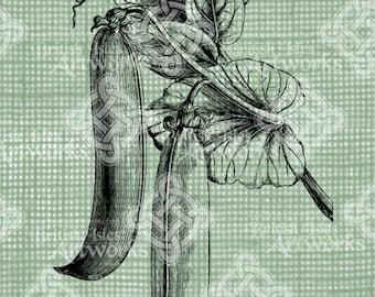 Digital Download Peapods on Vine digi stamp, digis, vegetable digital stamp, Snap Peas, Antique Illustration