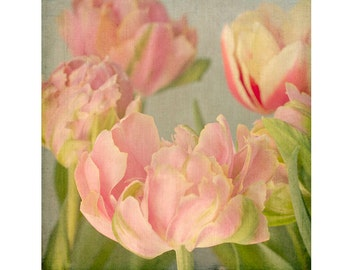 Parrot Tulip Photograph, Shabby Chic Decor, Floral Art Print, Flower Photography, Pink Bedroom Decor