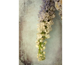 Dried Flower Art, Flower Photography, Rustic Decor,  Delphinium Print, Floral Art Print, Neutral Wall Art, Ornate Art
