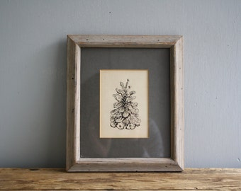 vintage pinecone pen and ink illustration