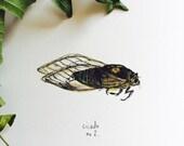 Cicada No.2 - Watercolor Art Print - 5x7 - cicada, locust, summer, study, nature, insect