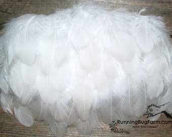 "Small White Feathers Real Bird Feather Loose Natural Feathers White Wyandotte Rooster Plumes Real Feathers For Crafts 30 @ 1.5 - 2.5"" / WW9"