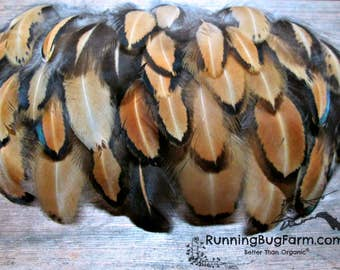 "Real Bird Feathers Loose Natural Feathers Cruelty Free Feather Golden Laced Cochin Hen Chicken Feathers For Crafts 30 @ 1.5 - 2.5"" / 7338"