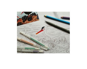 Oyster Catchers On Rock Coloring Page