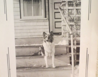 Vintage Photo Dog Posing on Steps 1943 Collie or Mutt americana history photo history