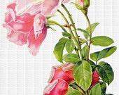 Instant Digital Download Chic Pink Shabby Vintage Roses Clip Art Transparent PNG - Instructions to make Waterslide Decals Bonus! ECS