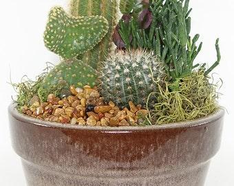 "Medium Cactus Garden - 8"" Earth Tone Ceramic Container - Perfect Table Setting, Centerpiece, Gift"