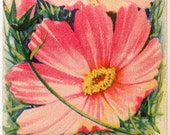 COSMOS! (Finest Giant Mixed) Vintage Flower Seed Packet Tuckers Seed House Lithograph (Carthage, Missouri)