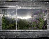 "purple flowers / stormy sky / landscape photography / rustic home decor / dame's rocket / nature photo art / nursery wall // ""triptych"""