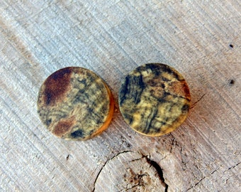 12.5mm Spotted Blue Buckeye burl wood ear plugs, Hand crafted wood plugs in Half inch gauge
